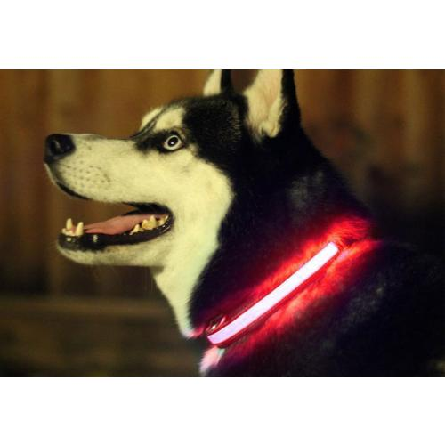 "Red Small (2.5 x 35""- 43"") Nylon LED Light up Collar - Provides Great Safety!"