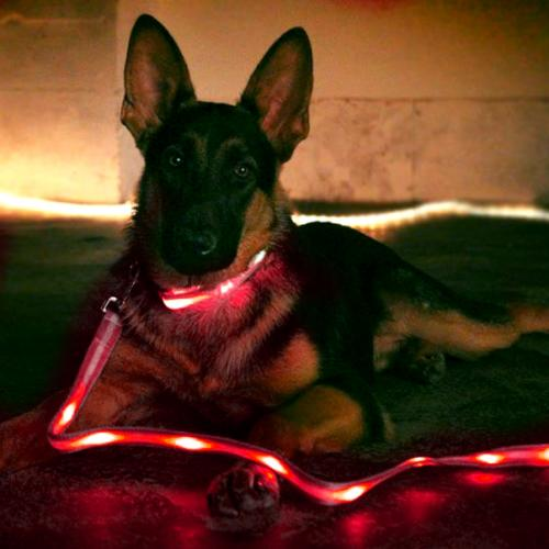 "Dog Walker's Combo W/ Red Nylon Universal Double Sided Led 48"" Light Up Leash & Red Small (2.5 X 35""- 43"") Nylon Universal Led Light Up Collar"