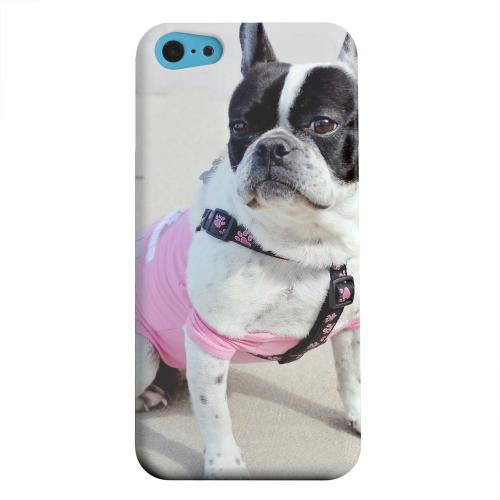 Geeks Designer Line (GDL) Apple iPhone 5C Matte Hard Back Cover - English Bulldog Mix