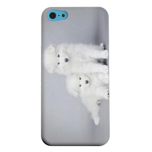 Geeks Designer Line (GDL) Apple iPhone 5C Matte Hard Back Cover - Samoyed Puppies