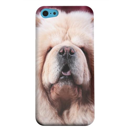 Geeks Designer Line (GDL) Apple iPhone 5C Matte Hard Back Cover - Chow Chow