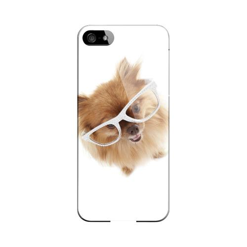 Pomeranian Impact Resistant Geeks Designer Line Slim Hard Case for Apple iPhone 5/5S