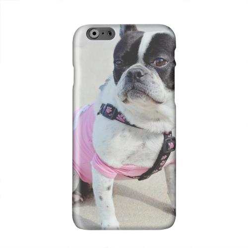 English Bulldog Mix Solid White Hard Case Cover for Apple iPhone 6 PLUS/6S PLUS (5.5 inch)