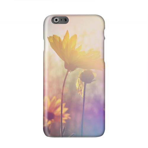 Colorful Daisy Bloom Solid White Hard Case Cover for Apple iPhone 6 PLUS/6S PLUS (5.5 inch)