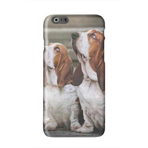 Bassett Hounds Solid White Hard Case Cover for Apple iPhone 6 PLUS/6S PLUS (5.5 inch)