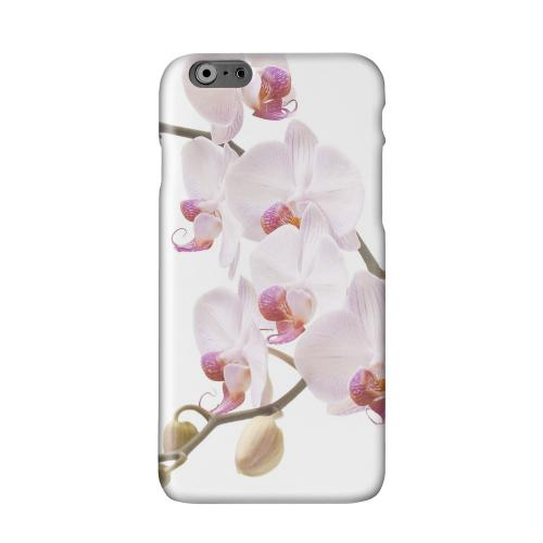 White Pink Orchid Solid White Hard Case Cover for Apple iPhone 6 PLUS/6S PLUS (5.5 inch)