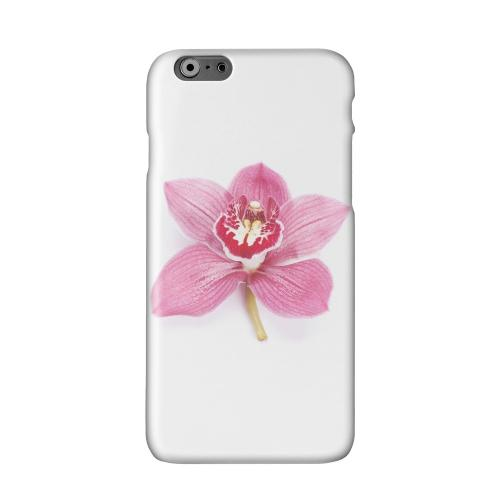 Single Pink Orchid Flower Solid White Hard Case Cover for Apple iPhone 6 PLUS/6S PLUS (5.5 inch)