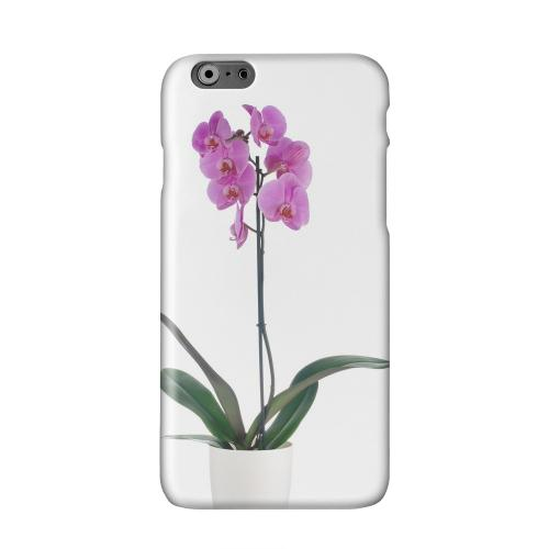 Hot Pink Orchid Plant Solid White Hard Case Cover for Apple iPhone 6 Plus