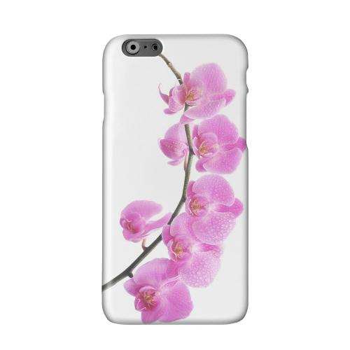 Hot Pink Orchid Curved Branch Solid White Hard Case Cover for Apple iPhone 6 Plus