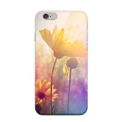 Geeks Designer Line (GDL) Apple iPhone 6 Matte Hard Back Cover - Colorful Daisy Bloom