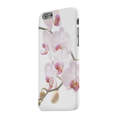 Geeks Designer Line (GDL) Apple iPhone 6 Matte Hard Back Cover - White Pink Orchid