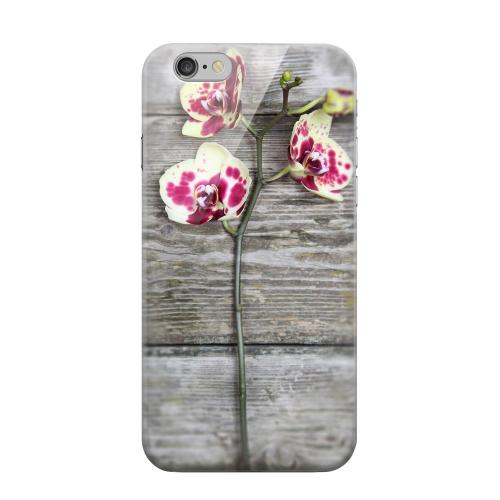 Geeks Designer Line (GDL) Apple iPhone 6 Matte Hard Back Cover - Orchid on Wood