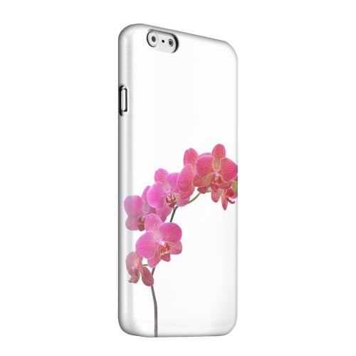 Geeks Designer Line (GDL) Apple iPhone 6 Matte Hard Back Cover - Hot Pink Orchid Branch