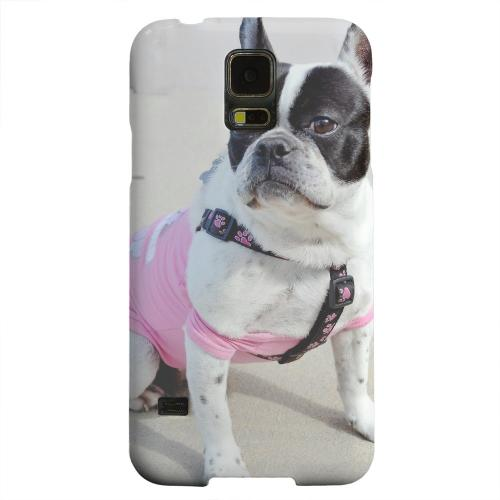 Geeks Designer Line (GDL) Samsung Galaxy S5 Matte Hard Back Cover - English Bulldog Mix