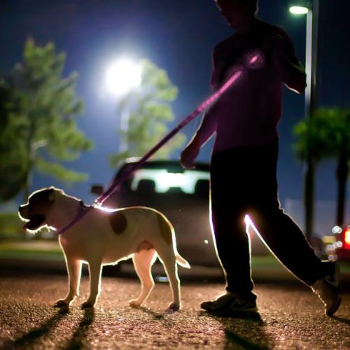 "Pink Nylon Universal Double Sided LED 48"" Light up Leash - Provides Great Safety!"
