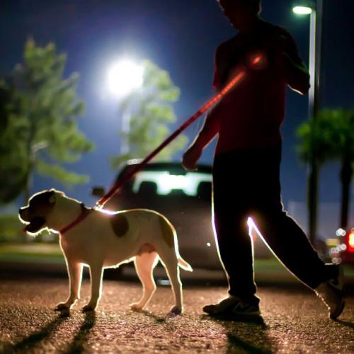 "Manufacturers Red Nylon Universal Double Sided LED 48"" Light up Leash - Provides Great Safety! Silicone Cases / Skins"